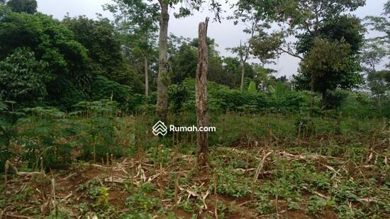 Tanah Murah di Jami Desa Sukajaya, Tamansari Bogor  95236465
