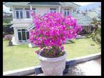 Villa Palem Garden